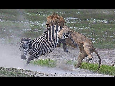 Дикая Природа - фильм о животных Африки (BBC) - Видео онлайн