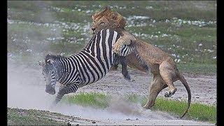 Дикая Природа - фильм о животных Африки (BBC)