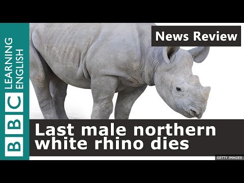 BBC News Review: Last male northern white rhino dies