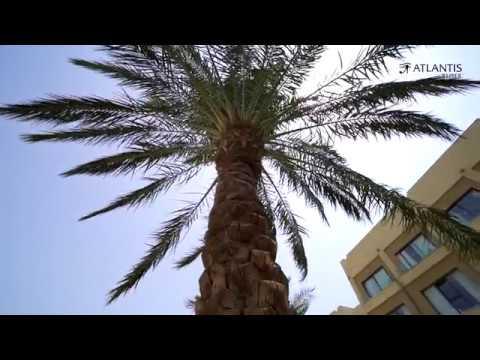 dating tjenester palm beach fl leo dating kompatibilitet