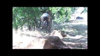 Factory Moto kids BMX jumps Supercross style!