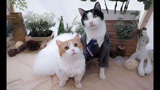 给两只猫咪大办婚礼,现场及其感人,铲屎官泪崩现场!