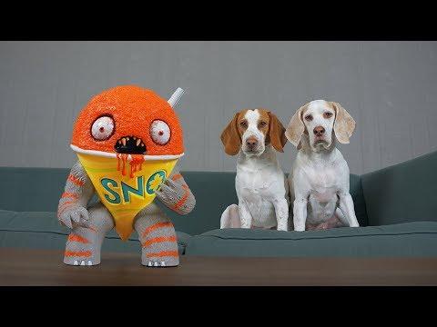Dogs vs Annoying Sno Cone Prank: Funny Dogs Maymo & Potpie Get Pranked!