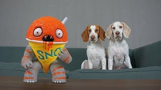 Dogs vs Annoying Sno Cone Prank: Funny Dogs Maymo & Potpie Get Pranked!