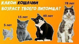 Какой кошачий возраст твоего котика?