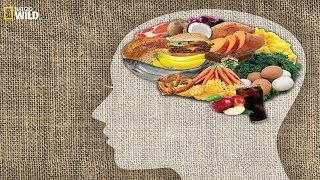 National Geographic - Food on the Brain - BBC Documentary