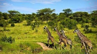 Африка крупным планом — Призраки Серенгети (Документальные фильмы National Geographic HD)