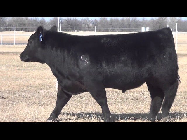 Express Ranches Lot 25