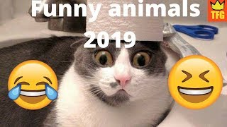 Cute and Funny animals 2019