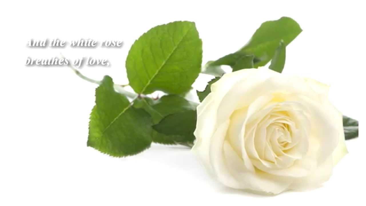 roses writing aidijuma songket