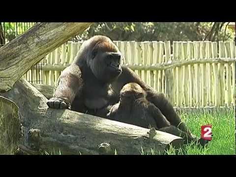 """Animalement vôtre"" le feuilleton JT 13h du 1er juin 2012"