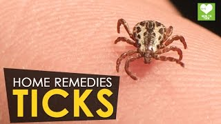Ticks - Home Remedies | Health Tone Tips