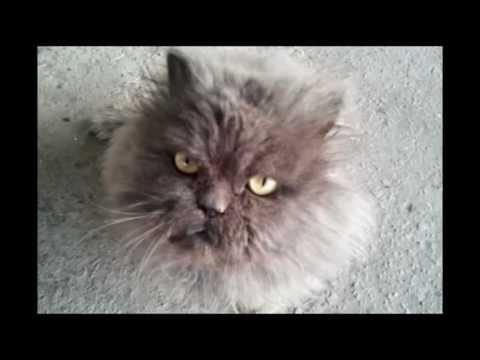 Вопрос: Как перевоспитать обнаглевшего кота?