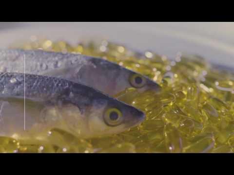 Fresh Fish Oil Lowers Diabetes Risk In Rat Offspring