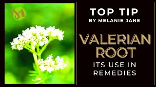 VALERIAN ROOT OIL - A Natural Sleep Aid