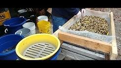 sorting bulk brass cases with shell sorter