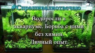 #Спрашивали_отвечаю. Водоросли в аквариуме. Борьба с ними без химии. Личный опыт.