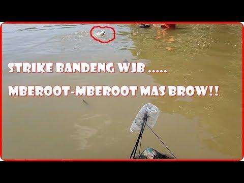 STRIKE BANDENG WADUK JATIBARANG (WJB) SAMPAI MBEROOT - MBEROOT  MANTAAP!!