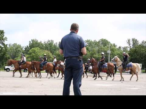 Police horses receive fireworks training