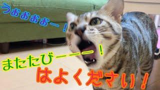 猫2匹、初めてのマタタビの反応は!?