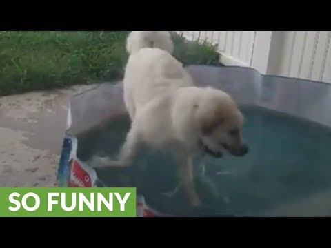 Happy doggy caught playing in kiddie pool