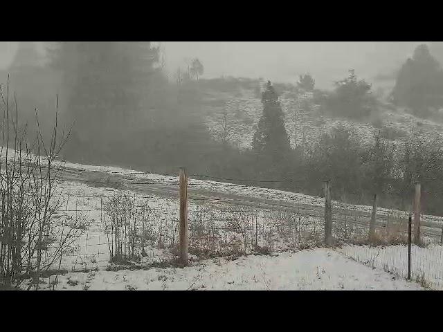 Snow Flurry!