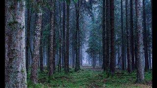 Dziwne dźwięki w Węgierskiej Górce