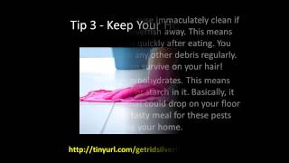How To Get Rid Of Silverfish - 5 Easy Tips