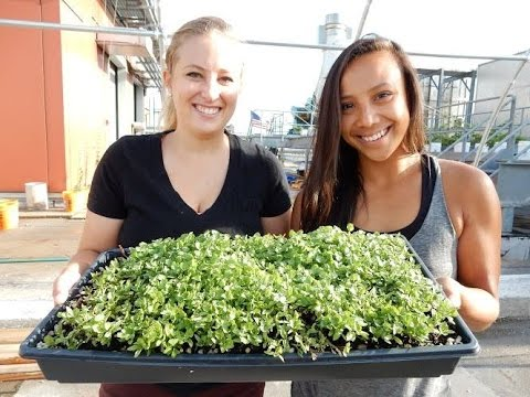 Tinyfield Roofhop: Urban farming in Brooklyn