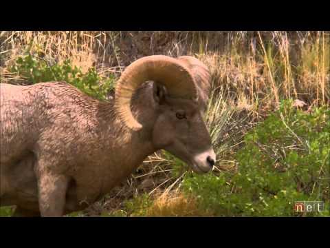 Wildcat Hills - a Nebraska Story