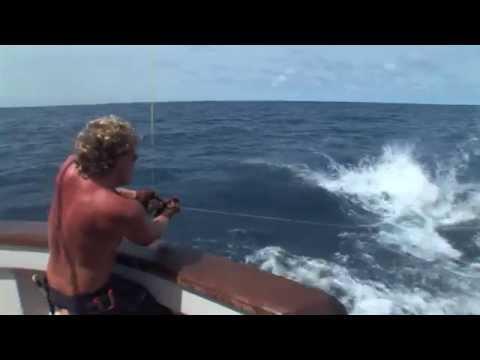 Saltwater Fish Mounts By King Sailfish Mounts.