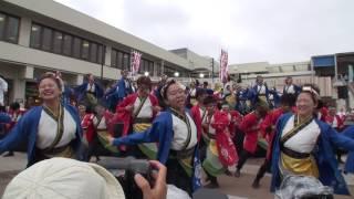 神戸学生よさこいチーム 湊 堺よさこいかえる祭り2017 いずみがおか広場会場2
