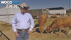 Geklonte Kreaturen - Artenschutz der Zukunft (Dokumentation, 2007)
