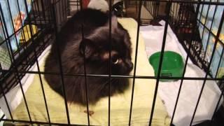 Выставка кошек. Вятка Today 25.11.2014