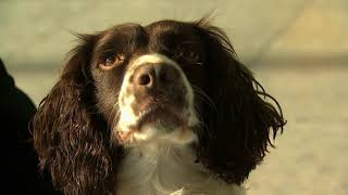 Hero Sniffer Dog Proves She's Top Dog At Heathrow Airport