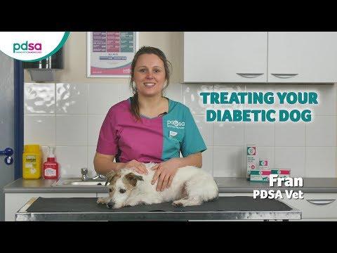 dog healthcare