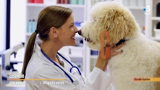 Ostéopathe animalier : 500 praticiens partout en France... Ensemble c'est mieux !