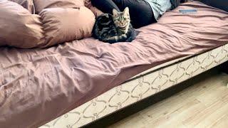 子猫が寝坊したので寝室まで起こしに行ったら可愛すぎたw