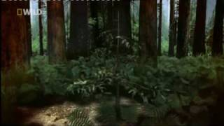 Worlds Tallest Tree - National Geographic Channel - Mike Cooper - British Voiceover Artist