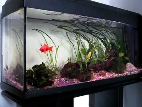 acquario con pesci rossi youtube