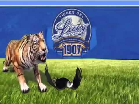 Los tigre del Licey Come Aguila J.R - YouTube