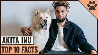 Akita Inu  Top 10 Facts | Dog World