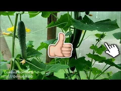 Что дает пищевая сода при выращивании огурцов&