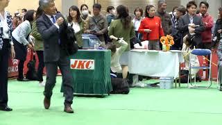FCIジャパンインターナショナルドッグショー2019 オス.