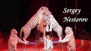 SERGEY NESTEROV ( Russia ) - White Tigers & Lion - Fővárosi …