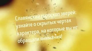 Славянский гороскоп зверей : Люди рожденные под знаком Ворон (10 февраля — 9 марта)