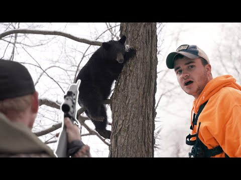 THE FIRST DAY OF THE DECEMBER BEAR SEASON – The Untamed Bear Hunting