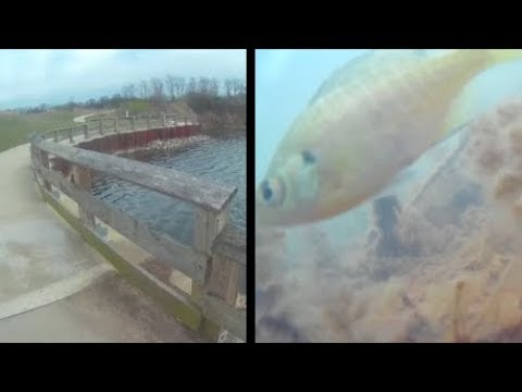 Underwater Episode 52: Budde Lake(Lake Renwick Rookery N.P.)(site30)