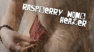 Raspberry Womb Healer  ||  Imbolc Poetry Film