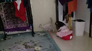 Shaki Never Harm The Cats
